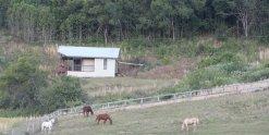 Horse Farm Cabin - Port Macquarie NSW Australia