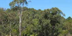 Private Guest Wing And Cabin Accommodation Australian Horse Holidays