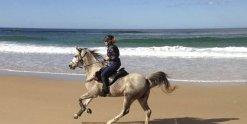 Arabian Horse Jimmy Canters On Australian NSW Beach - Southern Cross Horse Treks Australia