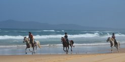 Horse Riding Port Macquarie Beaches NSW Australia For Experienced Riders