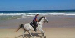 Beach Horse Riding Port Macquarie Region NSW - Horse Treks Australia