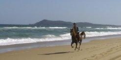 Kamal - Beach Horse Riding NSW - Southern Cross Horse Treks Australia