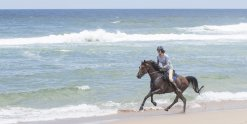 Horse Riding NSW Beaches Australia - Adventure Holidays