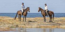 Australian Horse Holidays NSW Mid North Coast On Arabian Horses