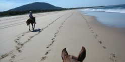 Long Sandy Empty NSW Beaches For Horse Riding Australia Pacific Ocean Coastline