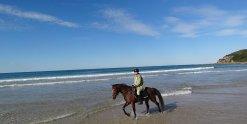 Kuta - Horse Riding Trek Beaches NSW - Horse Tours Australia