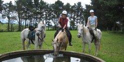 Horse Riding Tours At Comboyne's Green Pastures, Port Macquarie Hinterland, NSW Australia