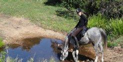 Jimmy Drinks At Creek, Kerewong Horse Riding Holiday Tours, Port Macquarie NSW Australia