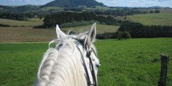 Horse Riding Treks, Port Macquarie Hinterland Comboyne NSW Australia