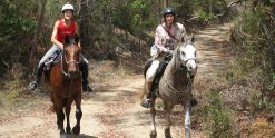 Comboyne Mountain Ride Horse Treks Australia NSW Adventure Tours