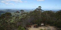 View On Top Of Comboyne Mountain - Horse Treks Australia NSW Adventure Tours