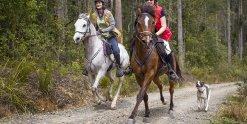 Horse Riding Treks Gallop Through Australian NSW North Coast Forest Horseriding Tour