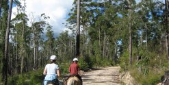 Horse Trails Australian Bush Port Macquarie Hinterland NSW