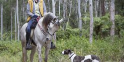Australian Horse Trek Tour Guide With Dog Support