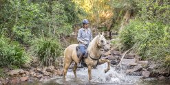 Finesse - Horse Riding Holidays Australia Port Macquarie Hinterland NSW