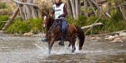 Endurance Riding NSW Australia With Kerewong Trail Horse Kuta 2014