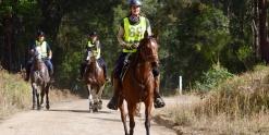 Endurance Ride Arabian Horse Australia