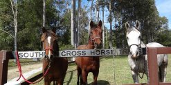 Southern Cross Horse Treks - Horse Riding Holiday NSW Australia