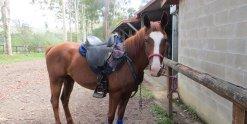 Aliya Saddled Ready For Horse Riding Holiday Australia