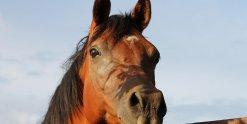 Valentino - Horse Riding Adventure Holiday NSW Australia