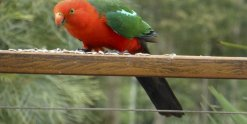 King Parrot Farm Holiday Birdlife NSW Australia