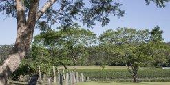 Winery Vineyards Horse Riding Tours NSW Australia