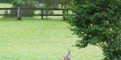 Australian Wildlife Wallaby In Garden Horse Riding Farm Holiday NSW