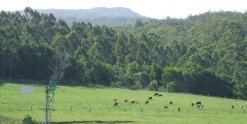 NSW Horse Riding Holiday Farm Mountain View Adventure Tours Australia