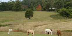 Kerewong Horse Trekking Tours NSW Country Trail Riding Holidays Australia