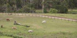 NSW Horse Riding Holiday Farm Adventure Tours Australia