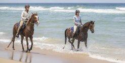Horse Riding Holidays Experienced Riders Beaches NSW - Horse Treks Australia