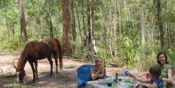 Australian Bush Horse Rider Picnic NSW - Southern Cross Horse Treks Holidays