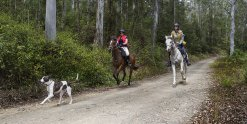 Australian Bush Horse Riding Australian NSW North Coast