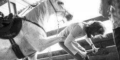 Horse And Hoof Care - Southern Cross Horse Treks NSW Australia