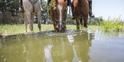 Horse Riding Water Stop At Comboyne, Port Macquarie Hinterland NSW Australia