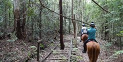 Adventure Horse Riding Treks Historic Timber Railway Line NSW Australia