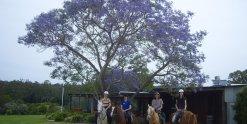 Horse Riding Winery Ride Bago Cellar Door Port Macquarie Hinterland NSW Australia
