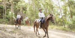 Horse Riding Downhill Trails Horse Treks Australia NSW Adventure Tours