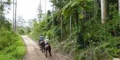Beautiful Forest Trails Horse Riding Adventure Tours NSW Australia
