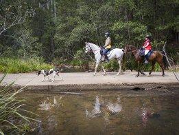 Kerewong State Forest Ride - Horsetreks Australia