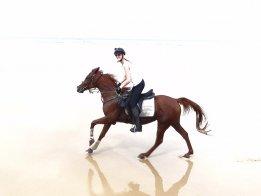 Aliya - Horse Riding Holidays Australia Port Maquarie Beaches NSW