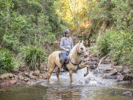 Finesse - Horse Riding Holidays Australia Port Maquarie Hinterland NSW