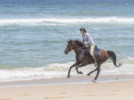 Kuta - Southern Cross Horse Treks Australia Endurance Horse Riding Port Macquarie NSW