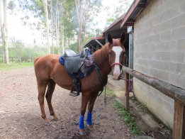 Ready for horse riding holiday
