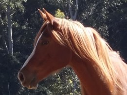 Australian Horse Riding Holidays