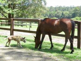 Australian Horse Farm Life