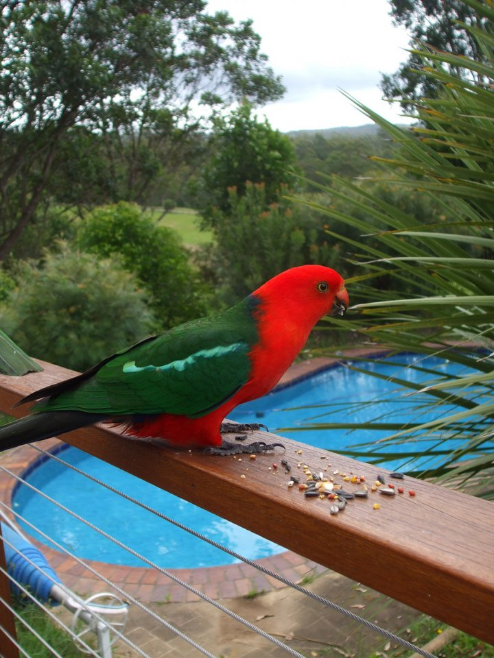 King Parrot & Kerewong Pool