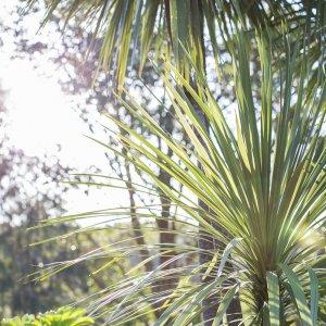 Mid North Coast NSW Semi Tropical Views