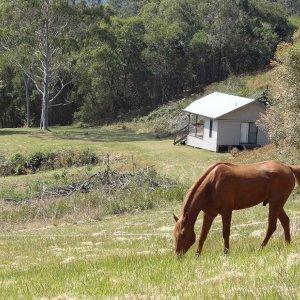 Kerewong Studio Cabin Horse Riding Farm Holiday - NSW Australia
