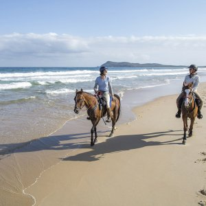 Late Afternoon Summer Horse Beach Ride Trek NSW Australia